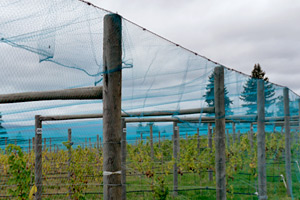 Overhead Vineyard Netting