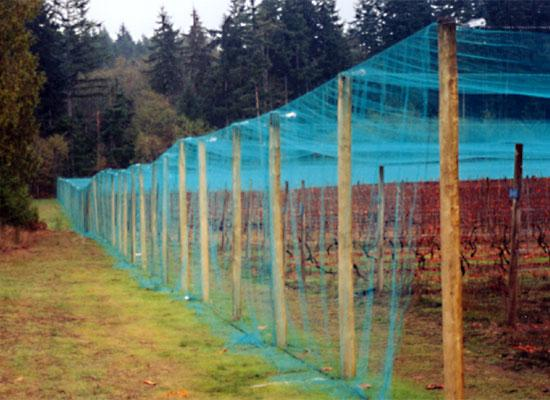 Overhead Crop Netting - Smart Net Systems - Industrial Netting Systems
