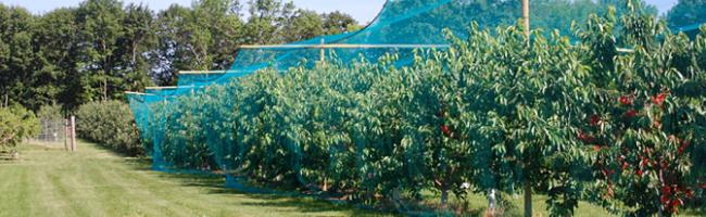 Cherry Tree Netting
