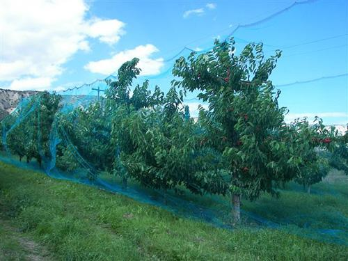 Fruit Tree Netting Smart Net Systems Industrial Netting