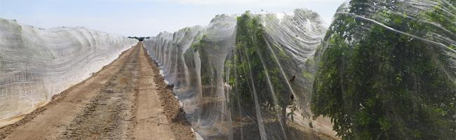 Fruit Tree Netting