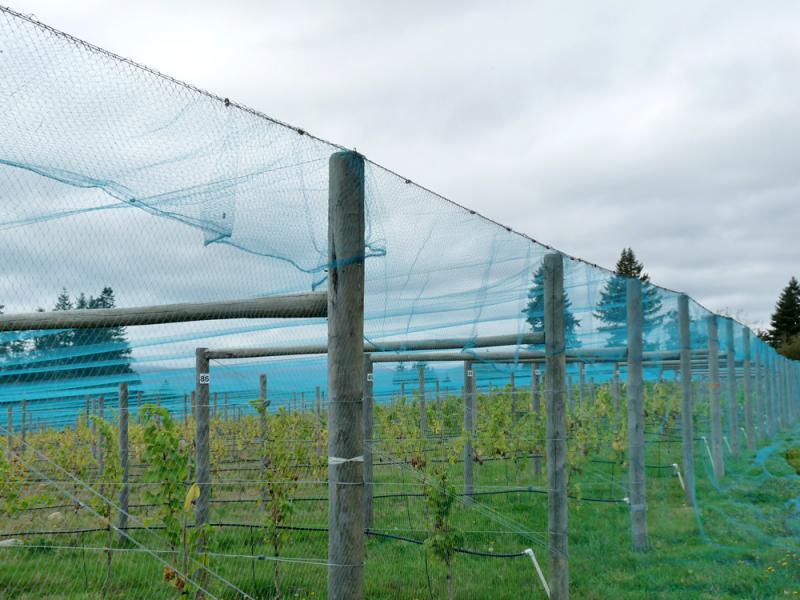 Overhead Vineyard Netting