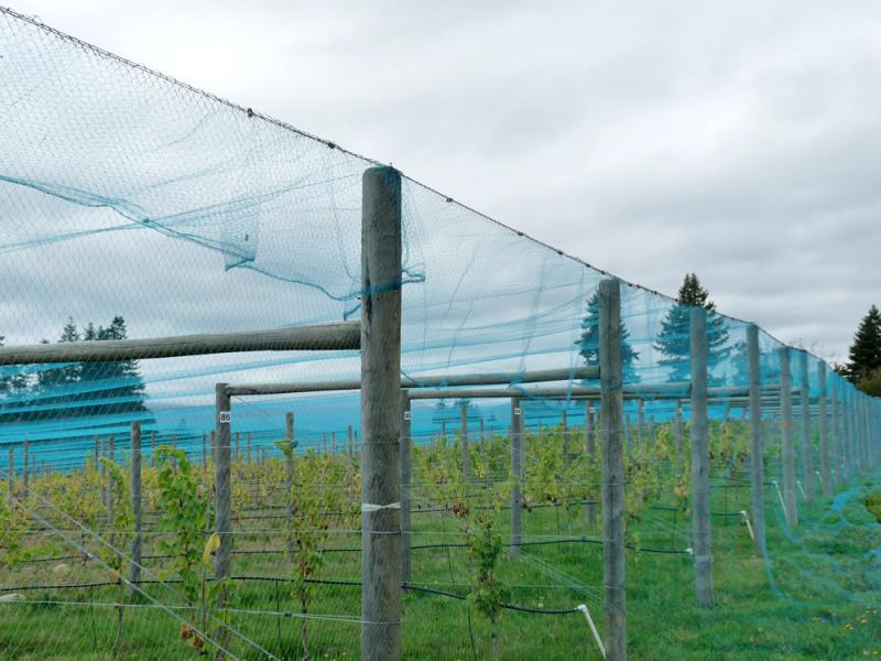 Overhead Crop Netting Blueberry