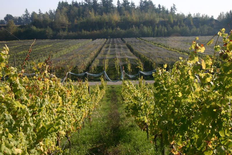 Vineyard Netting - Smart Net Systems - Industrial Netting