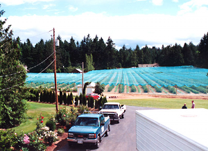 Blueberry netting applied to crops