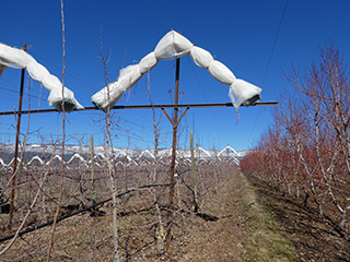 Smart Net Systems Hail protection for orchard crops