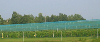 Overhead Netting System